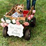 Mascotas en las bodas, ¡Claro que sí!